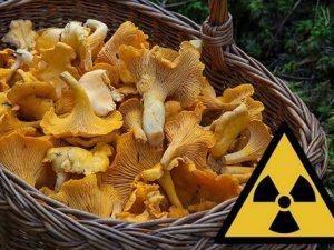 грибы и радиоактивность
